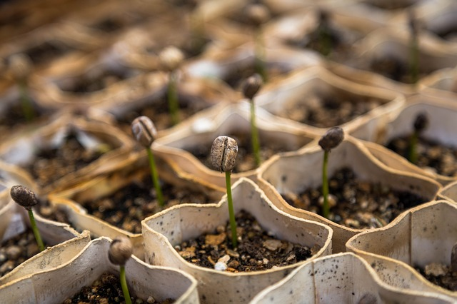 sazenice rostlin